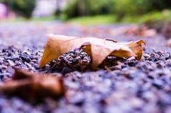 在一个分支的任意叶子在秋天 在秋天的五颜六色的自然 库存照片