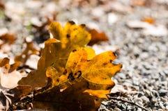 在一个分支的任意叶子在秋天 在秋天的五颜六色的自然 免版税库存图片