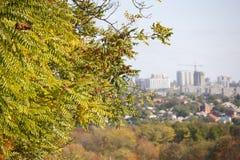 在一个分支的山楂树莓果在与浅景深的秋天自然本底 免版税库存照片