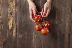 在一个分支的新鲜的红元帅蕃茄在妇女在木背景的` s手上 免版税库存图片
