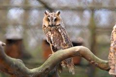 在一个分支的猫头鹰在动物园里 库存图片