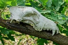在一个分支的白色动物头骨与绿色叶子 库存照片