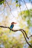 在一个分支的白色红喉刺莺的翠鸟restin与明亮,温暖 免版税库存图片