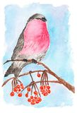 在一个分支的红腹灰雀用莓果 向量例证
