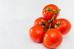 在一个分支的红色和成熟蕃茄与水滴 库存照片