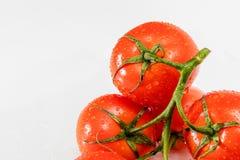 在一个分支的红色和成熟蕃茄与水滴 免版税库存图片