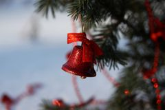 在一个分支的红色圣诞节铃声在公园 免版税库存图片