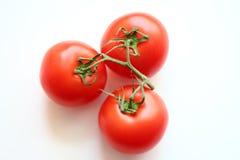 在一个分支的红色蕃茄在白色背景 免版税库存照片