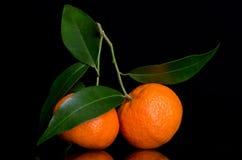 在一个分行的蜜桔与叶子 免版税库存图片