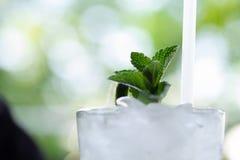 在一个刷新的mojito鸡尾酒的上面的薄荷的小树枝 免版税库存照片