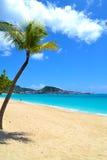 在一个加勒比岛海滩的岸的美丽的棕榈树 免版税库存照片