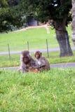在一个动物园或一个徒步旅行队公园里胡闹farmily在英国 免版税库存图片