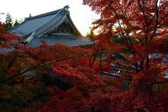 在一个古庙前面的红色秋天槭树在秋天期间在京都,日本 免版税库存图片