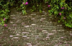 在一个古老砖墙上的绿色叶子 免版税库存图片