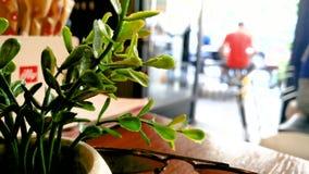 在一个咖啡馆里面的塑料植物装饰与人 影视素材