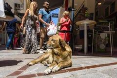 在一个咖啡馆附近的流浪狗在购物街道上在城市的历史的中心 库存图片
