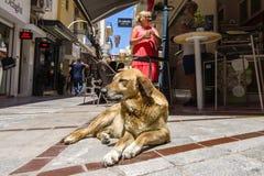 在一个咖啡馆附近的流浪狗在购物街道上在城市的历史的中心 图库摄影