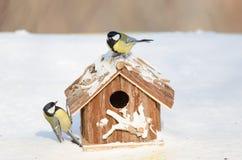 在一个哺养的房子的伟大的山雀在一个多雪的冬日 库存图片