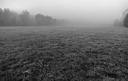 在一个国家公园的冷淡的早晨 库存图片