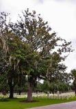 在一个国家公墓的Chokeweed装满的树 图库摄影
