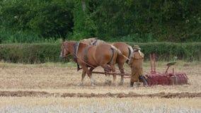 在一个国家展示的萨福克重的马在英国 库存照片
