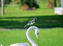 在一个图的蓝色Jayon以天鹅的形式,位于庭院 免版税库存图片
