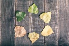 在一个圈子的叶子在褐色 免版税库存图片