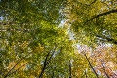 在一个圈子的树梢在蓝天下 库存图片