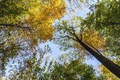 在一个圈子的树梢在蓝天下 免版税图库摄影