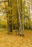 在一个土气秋天公园制表和两条长凳 库存照片