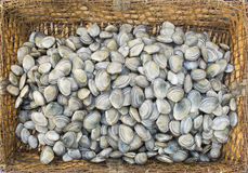 在一个土气篮子的新鲜的蛤蜊 免版税库存图片