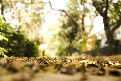 在一个地方烘干叶子在小阳春 库存照片