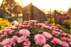 在一个坟墓的花在公墓 免版税库存照片
