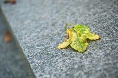 在一个坟茔的秋季叶子在公墓 免版税库存照片