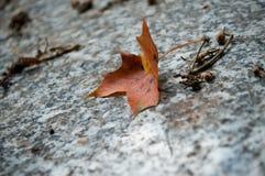在一个坟茔的秋季lef在公墓 库存照片