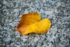 在一个坟茔的秋季lef在公墓 库存图片