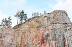 在一个垂直的岩石的结构树 免版税库存图片