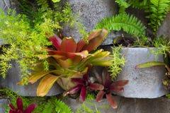 在一个垂直的庭院的Bromeliads花 库存照片