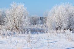 在一个域的冬天结构树与蓝天 库存图片