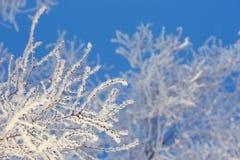 在一个域的冬天结构树与蓝天 免版税库存照片
