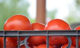 在一个塑料盒的蕃茄 免版税库存照片