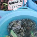 在一个塑料盒的蛤蜊 图库摄影
