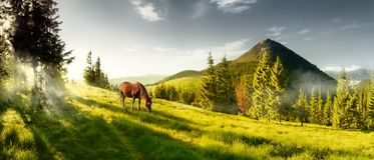 在一个夏天牧场地的马山的 免版税库存图片