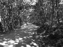 在一个夏日的森林公路 库存图片
