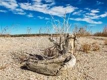 在一个多岩石的海滩的漂流木头 免版税库存图片