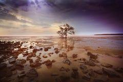 在一个多岩石的海滩的一棵树 库存照片