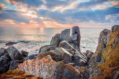 在一个多岩石的海滩的日出 在石头的开花的野花 库存图片