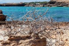 在一个多岩石的海滩的漂流木头 免版税图库摄影