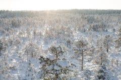 在一个多雪的冬天森林风景的太阳设置 库存图片