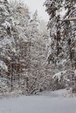 在一个多雪的森林里滑 库存图片